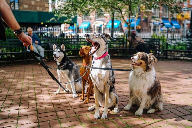 Garde et promenade d'animaux pour gagner de l'argent